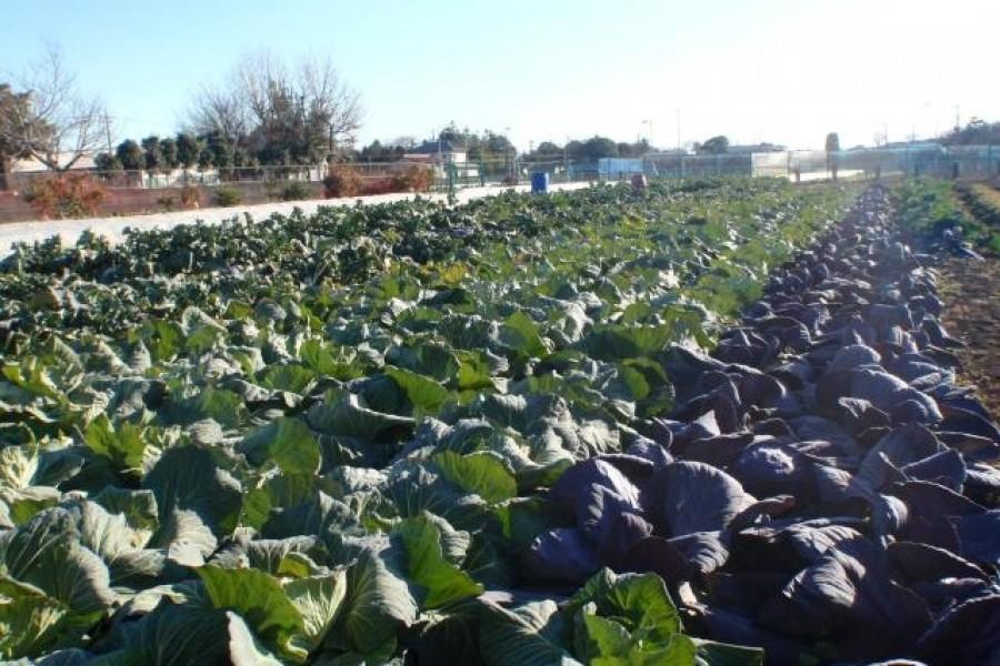 La ferme saisonnière de Shunsai