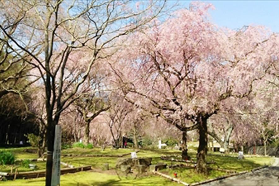 Le parc des ruines du château Arai - 2