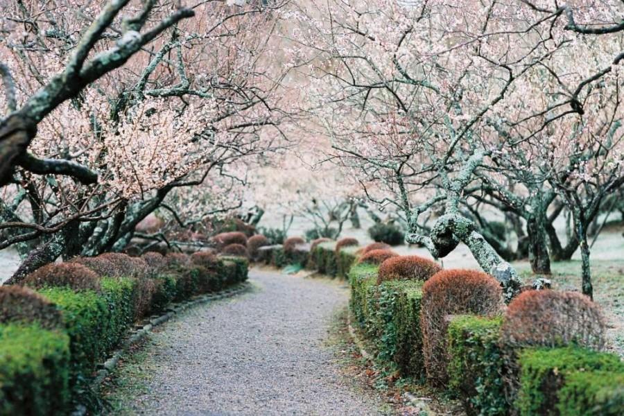 辻村植物公园 - 1