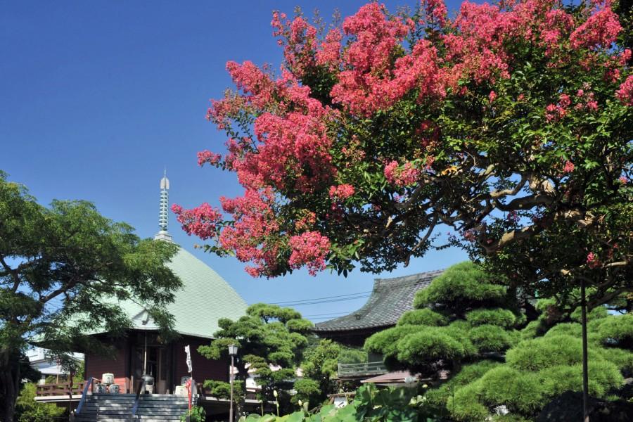 Hongaku-ji temple - 1