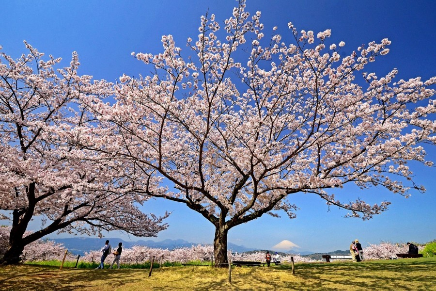 สวนอะซุมะยะมะ - 3