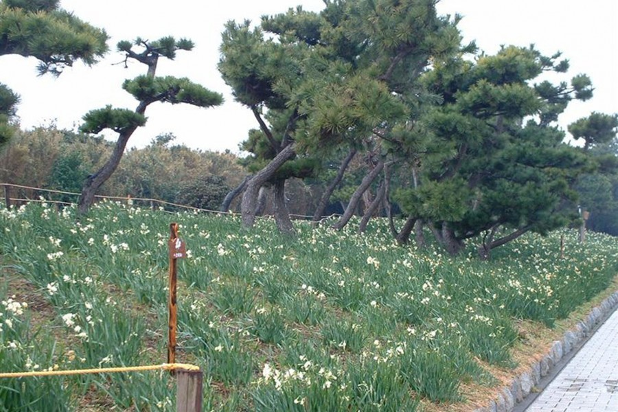 Le parc Jogashima - 2