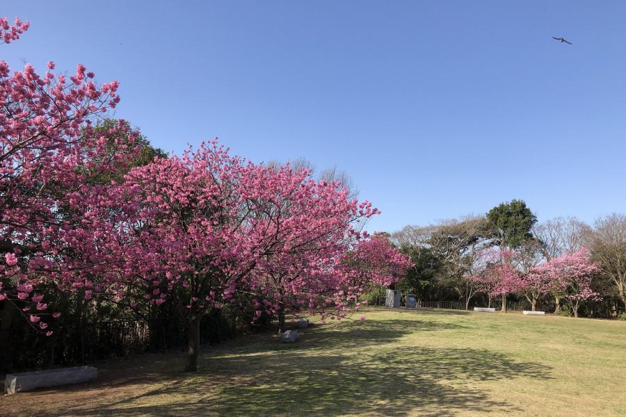本牧山頂公園からの眺望と四季の花々が楽しめる三溪園へ