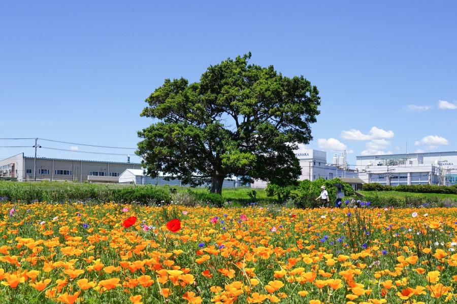 이식스 바뉴 공원(꽃밭)
