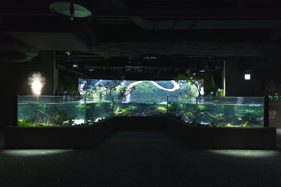 Kawasui 川崎水族館 - 2